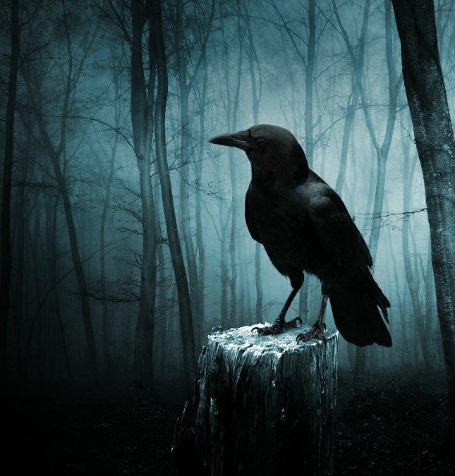 Казачья песня Чёрный ворон